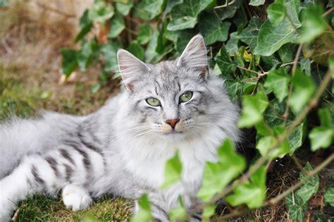 Efeu » Wie Giftig Ist Er Für Katzen?