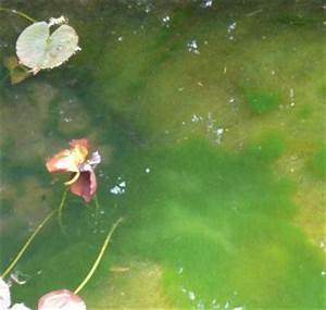 Algen Im Gartenteich : algen im gartenteich bek mpfen ~ Michelbontemps.com Haus und Dekorationen