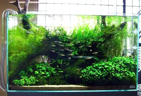 aquascaping ideas 50 aquascape aquarium design ideas aquariums