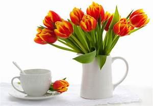 Tulpen In Vase : bl tenkalender januaur bis mai blumenversand edelwei ~ Orissabook.com Haus und Dekorationen