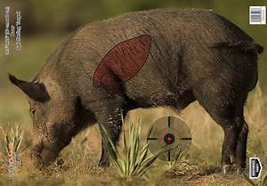 Pregame Splattering Boar Target From Birchwood Casey