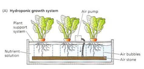 การปลูกพืชไร้ดิน (Soilless Culture)