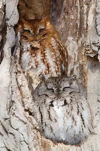 21 Amazing Owl Camouflage  21 Pics