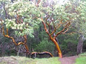 Zone 4 Fruit Trees