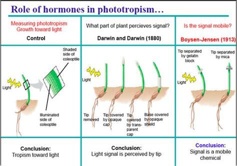 plant growth biologyisc