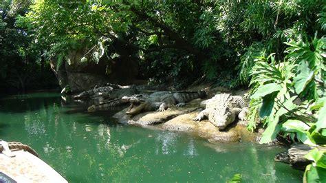 hong kong disneyland jungle river cruise