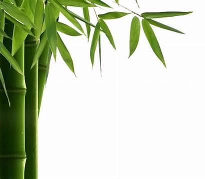 Bamboo Leaf Resolution Transparent Background Vector Freepngimg