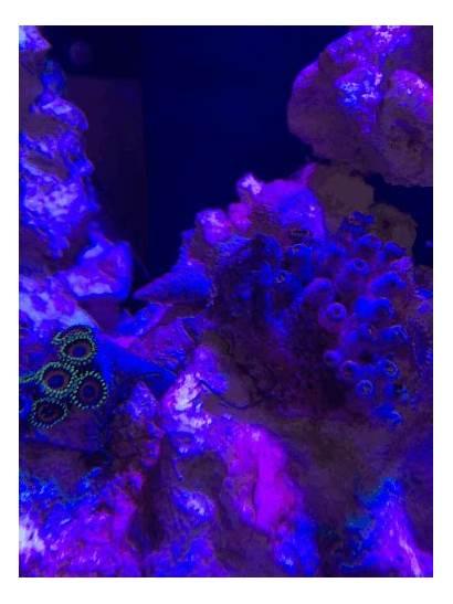 Stringy Algae Brown Nano Reef Filmy