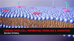 Lipid Bilayer  Cell Membrane  Modeling  U0026 Animation