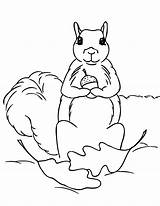 Squirrel Coloring Pages Acorn Holding Clipart Printable Cliparts Clip Animal Library Coloringpages101 Animalplace Popular Chipmunk sketch template