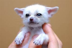 Cute Unusual Baby Animals | www.imgkid.com - The Image Kid ...