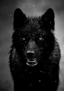 cool wolf wallpapers  android apk