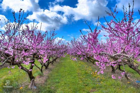 sfondi primavera fiori immagini primaverili desktop