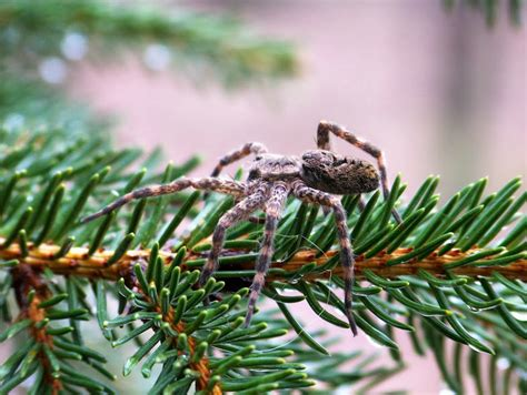do real christmas trees have bugs moved permanently