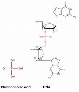 Biochemistry - Dna As An Acid