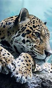 Mobile Wallpaper Cool Animals - WallpaperSafari