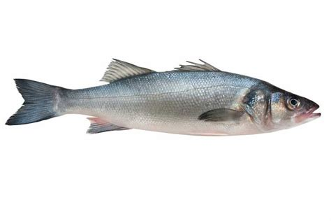 sea bass fish a fishy tale for the origins of some mcs chilean sea bass nature the earth times