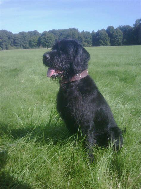 musings   biologist  dog lover unusual breed