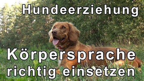 Glueckliche Haustiere Sauberkeit Und Erziehung by Hundeerziehung Hundetraining 220 Bungen Mit Tipps Zum Thema