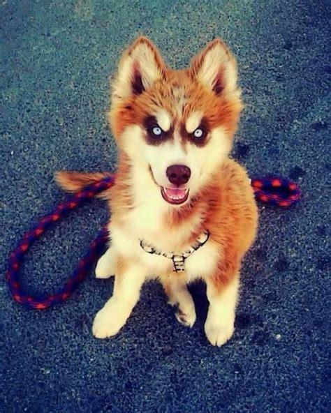 cute dog  tumblr