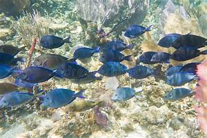 Tropical fish in Belize stock photo. Image of fauna, color ...