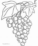 Coloring Grapes Template Fruit Bunch Grape Drawing Purple Books Fruits sketch template