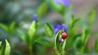 Ick Ladybugs Ladybug Spring Fanpop Scene Background