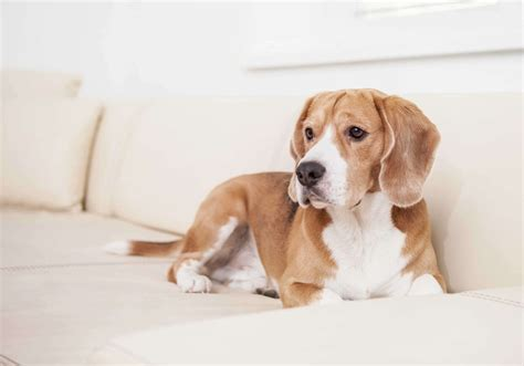 dog friendly sofa fabric home décor ideas for pet lovers mozaico blog