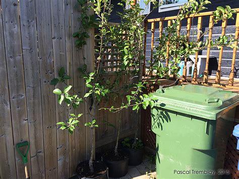 planter un pommier guide de plantation de pommiers au jardin