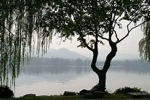 Baum Am Wasser : kostenlose foto landschaft baum wasser natur ast ~ A.2002-acura-tl-radio.info Haus und Dekorationen