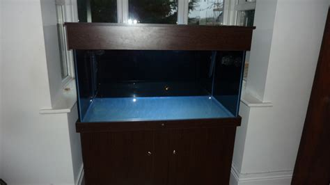 what should i put in my water for my christmas tree should i put a background on my fish tank aquarium tropical fish site