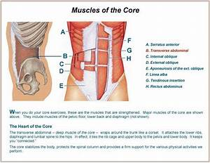 Core strength ~ How to build muscles
