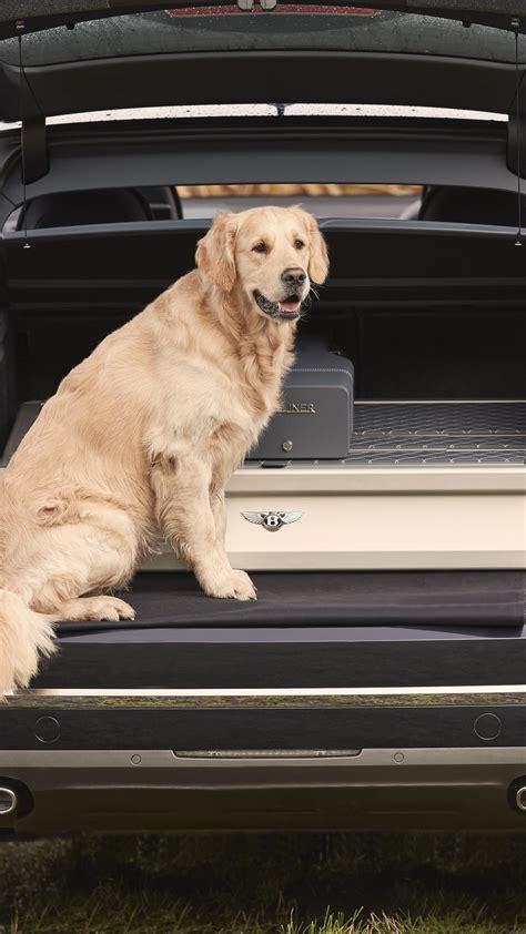 wallpaper bentley bentayga field sports  cars dog