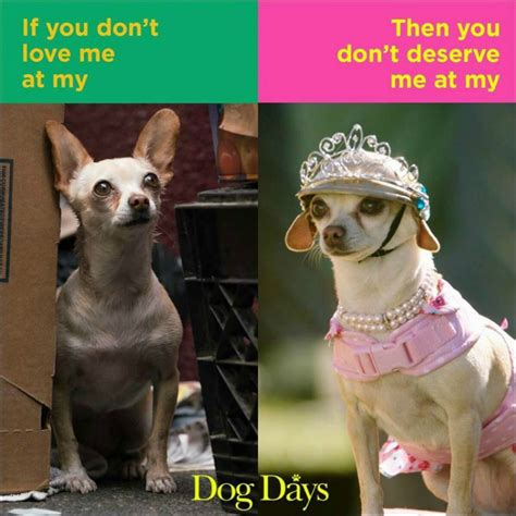 win  dog days prize package including  fandango gift