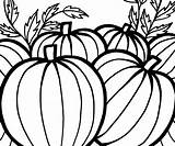 Pumpkin Coloring Pumpkins Pages Patch Thanksgiving Printable Sheet Celebrate Template Clipartmag Popular sketch template
