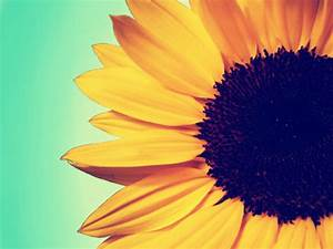 Vintage Sunflower Photography - wallpaper.