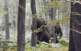 Pennsylvania Bigfoot Sightings 2013