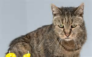 world s cat meet nutmeg could this be the world s oldest cat