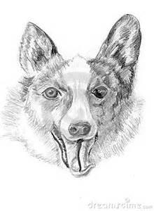 Dog Head Sketch