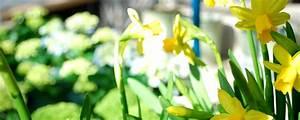 Blumen Im Frühling : blumen im fr hling blumenhaus koch blomberg ~ Orissabook.com Haus und Dekorationen