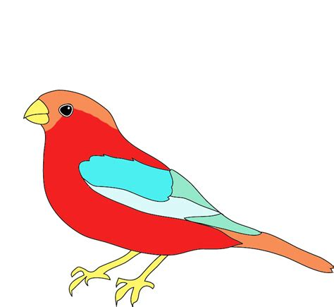 bird colors colorful drawings of birds