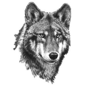 tatouage temporaire noir  blanc tete de loup    cm