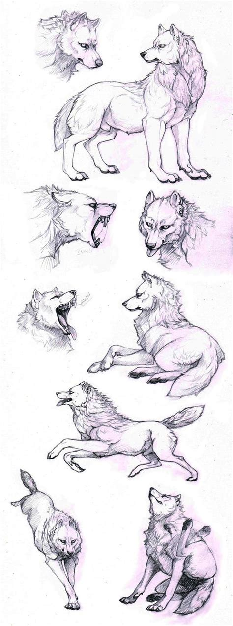 draw  wolf  poses howling lying