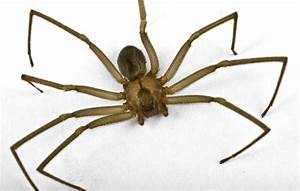 Most Dangerous Spiders in The World 2017, Top 10 List