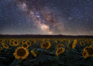 Lots Of Stars And Lots Of Sunflowers