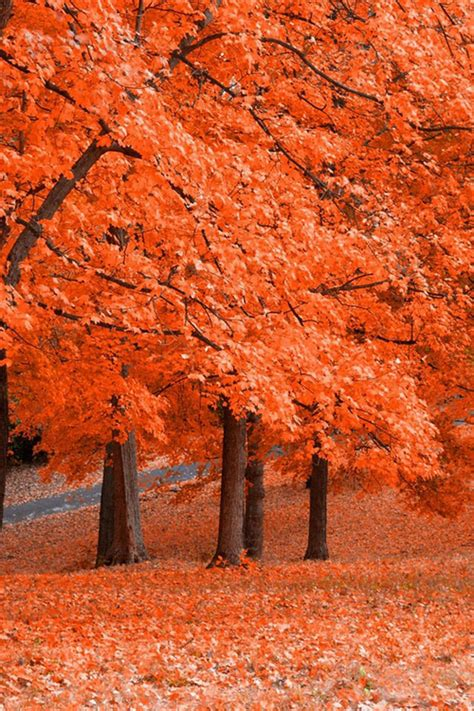 autumn trees pictures   images  facebook