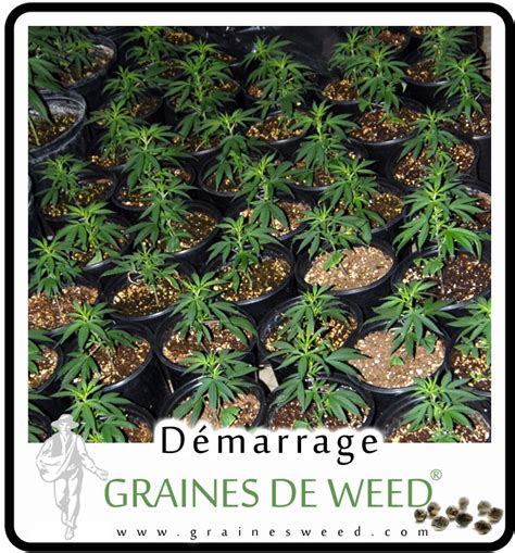 guide culture autofloraison exterieur 28 images autoproduction de cannabis en ext 233 rieur