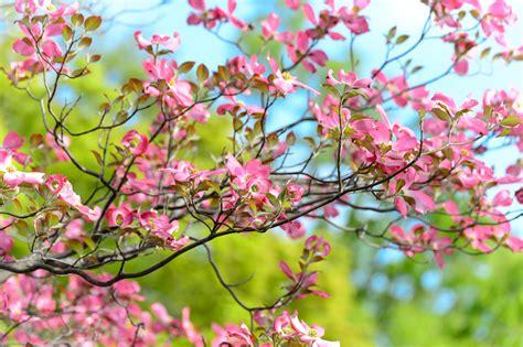 Free Images : landscape tree branch flower petal