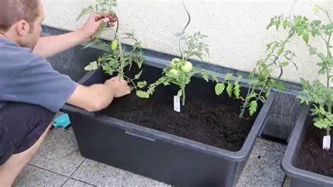 Tomaten Im Blumenkasten by Tomatenk 252 Bel Einfach Und G 252 Nstig Selbst Bauen