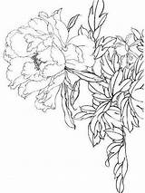 Coloring Peony Flower Pages Flowers Printable Print Recommended Mycoloring sketch template